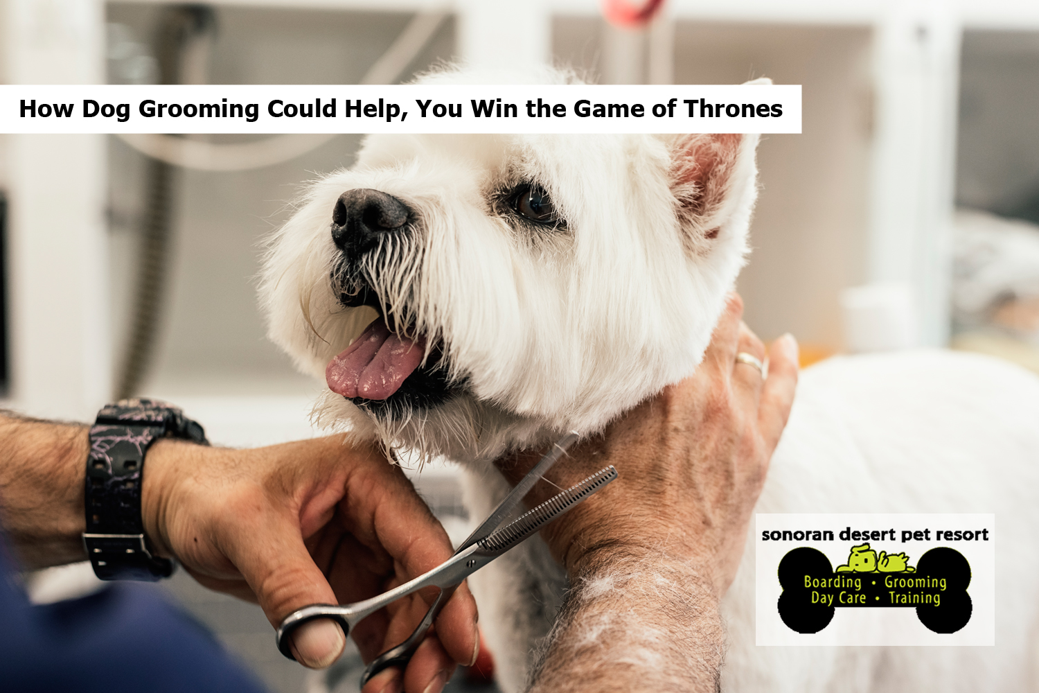 How Dog Grooming Could Help, You Win the Game of Thrones