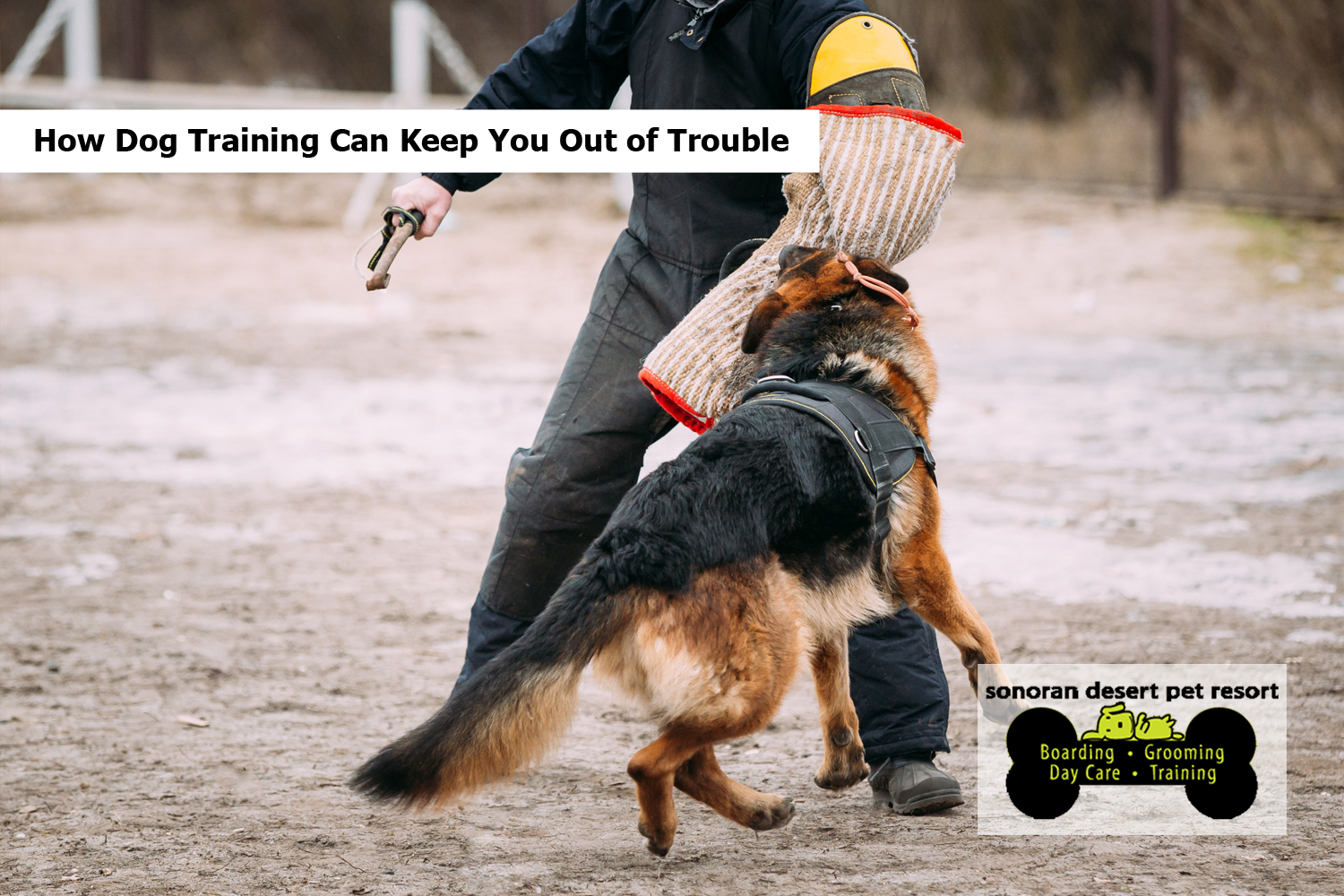 How Dog Training Can Keep You Out of Trouble